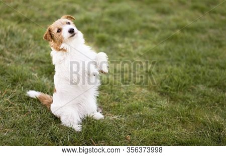Small Cute Funny Smiling Obedient Dog Puppy Sitting In The Grass, Pet Training, Obedience Concept