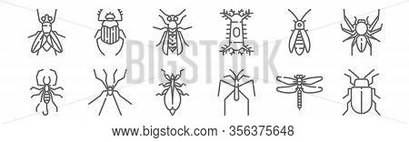Set Of 12 Insects Icons. Outline Thin Line Icons Such As Bug, Spider, Spider, Firefly, Wasp, Beetle