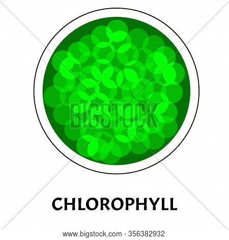 Chlorophyll. Green Coloring Matter Of Leaves. Chlorophyll Structure. Illustration On Isolated Backgr