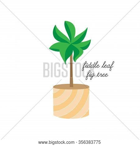 Fiddle Leaf Fig Tree Vector Illustration Graphic. Hand Drawn Cute Indoor Plant In Pot. Isolated.