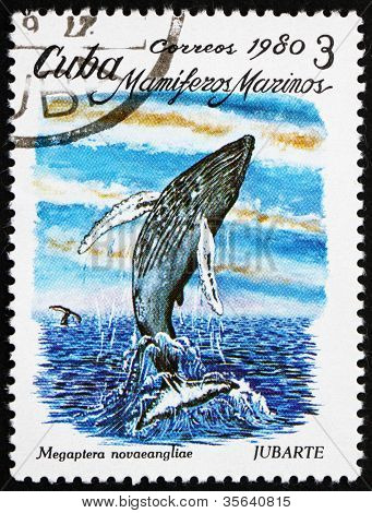Postage stamp Cuba 1980 Humpback Whale