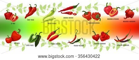 Scoville Scale Of Chilli Peppers Infographic Vector Illustration. Heat Units For Red And Green Chili