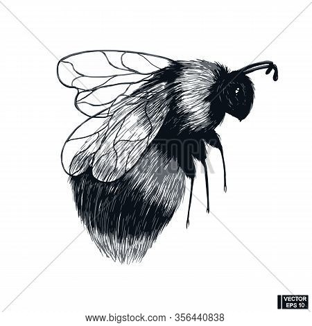 Hand Drawn Sketch Of Insect. Bumblebee In Flight.
