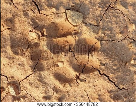 Dogs Walk On Ground Foot Nails On Sand Soil Seems Clearly Soil Cracked Brown Mud Appeared.dog Foot P