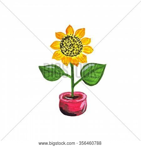 Blooming Yellow Sunflower In A Red Flower Pot. Bright Summer Oilseed Flower. Hand Drawn Colorful Gar