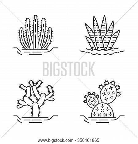 Wild Cacti In Ground Linear Icons Set. Tropical Succulent. Spiny Plant. Zebra Cactus, Cholla, Prickl