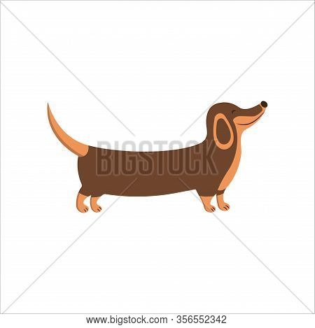 Happy Dachshund Walks And Smiles. National Puppy Day. Lovely Animal, People Best Friend, Favorite Pe