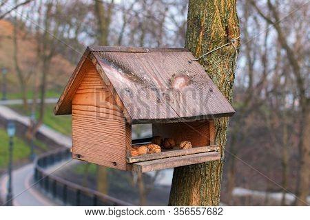 Beautiful Garden Wooden Bird Feeder With Several Walnuts In The Park. Saint Volodymyr Hill (vladimir