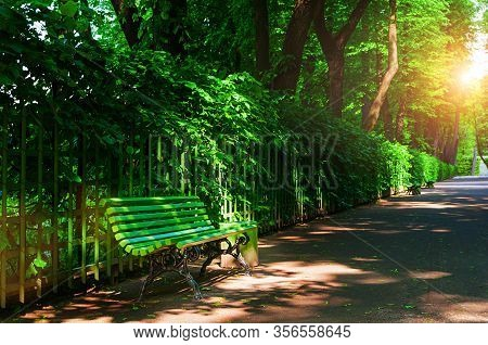 Summer landscape - colorful summer city park with deciduous summer green trees and bench along the alley in sunny summer weather. Summer park landscape, sunny summer park scene