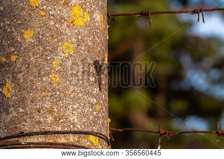 A Dragonfly Basks In The Rays Of The Setting Sun Clinging To A Vertical Post With Barbed Wire.