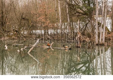 Little Swampland With Stagnant Water And Broken Trees