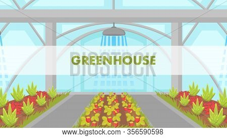 Berries Growing In Greenhouse Vector Web Banner. Strawberry Indoor Cultivation Poster. Vegetables An