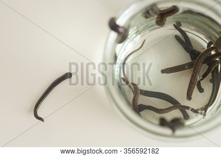 Hirudotherapy. Medical Leeches In Water Before Therapy.