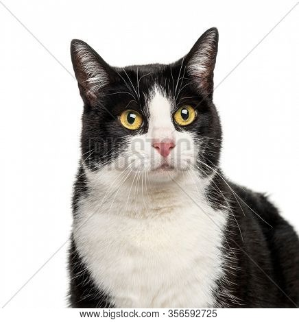 Close-up of a Black and white crossbreed cat, isolated on white