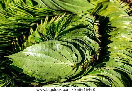 Fresh Green Betel Leaves On The Market