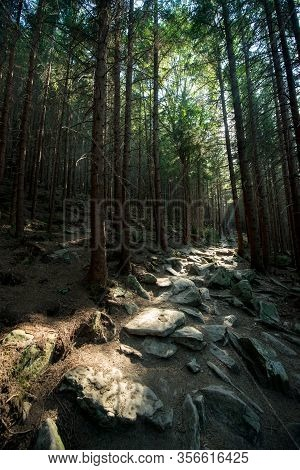 Scenic Stone Road In A Mountain Dark Forest Lit By The Sun