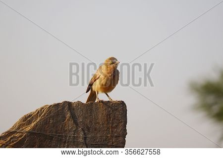 A Bird Rest On Rock In Day, Outside Birds,european Robin Bird On A Rock ,cute Little Bird, Beautiful