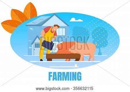 Farming Banner. Man Feeding Pigs Putting Grain In Trough In Livestock. Farmer Character At Work Proc