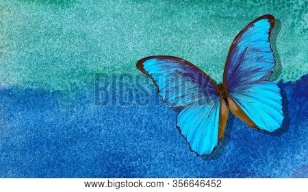 Bright Morpho Butterfly On Abstract Blue Watercolor Background. Wet Watercolor Paper Texture Backgro