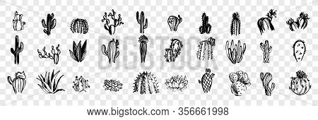 Doodle, Sketch, Hand Drawn Cactuses Set Collection. Pen Or Pencil, Ink Hand Drawn Various Cactuses.