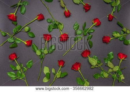 Many Fresh Red Rose Flowers On Black Background. Floral Composition, Mourning Card For Event. Mourni