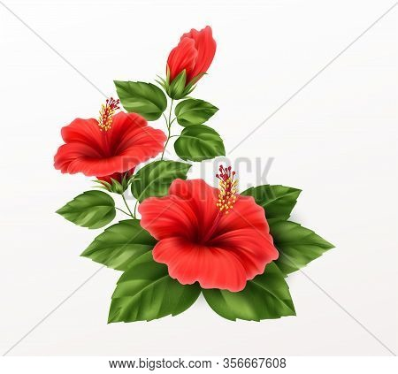 Beautiful Hibiscus Flower, Buds And Leaves Isolated On White Background. Exotic Tropical Plant Reali