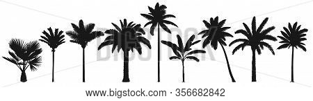 Palm Trees Silhouette. Retro Coconut Trees, Hand Drawn Tropical Palm Silhouettes Vector Set. Illustr