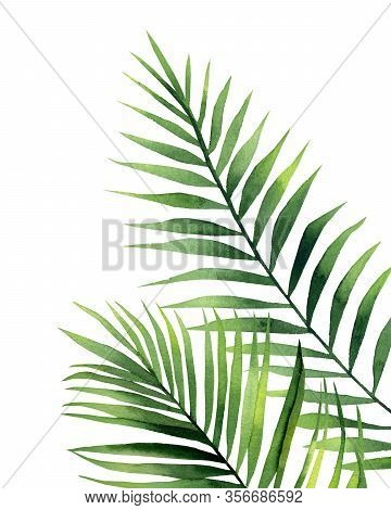Tropical Palm Fronds. Exotic Plant Detail For Card, Postcard, Invitation, Greeting, Pattern. Waterco