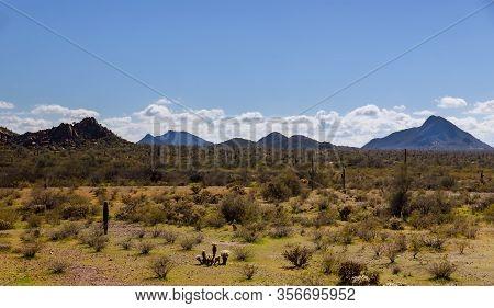 Saguaro Cactus Covered In Snow Sonoran Desert Arizona