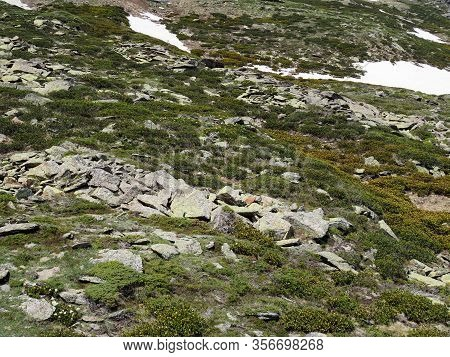 Rocky Mountainside Covered With Fresh Green Grass, Flowers And A Little Snow That Has Not Melted, Al
