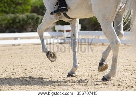 Legs And Hoofs Of A Mare In A Dressage Grand Prix Test Doing Piaffe