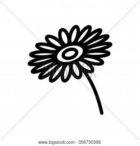 Bright Chrysanthemum Icon Vector. Bright Chrysanthemum Sign. Isolated Contour Symbol Illustration