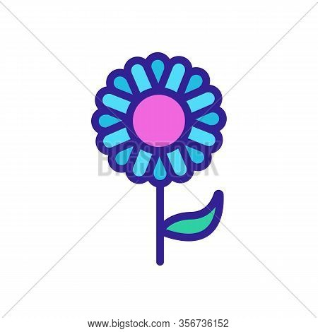 Spring Chrysanthemum Icon Vector. Spring Chrysanthemum Sign. Color Isolated Symbol Illustration
