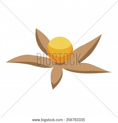 Physalis Seed Icon. Isometric Of Physalis Seed Vector Icon For Web Design Isolated On White Backgrou