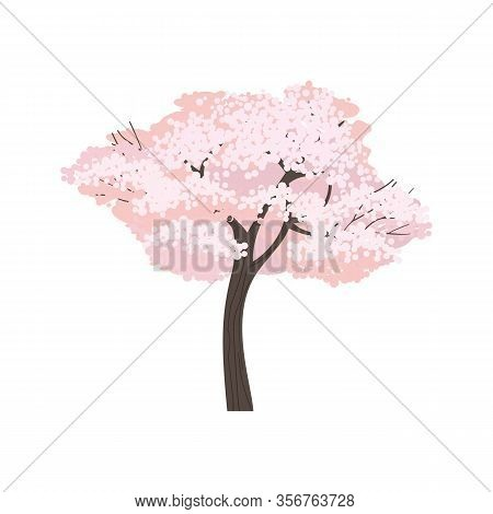 Springtime Blossoming Cherry Tree Isolated On White Background Vector. Pretty Sakura Blossoms Pink P