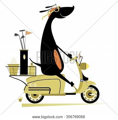 Smiling Dog Rides A Scooter And Goes To Play Golf Isolated Illustration. Smiling Dachshund On The Sc