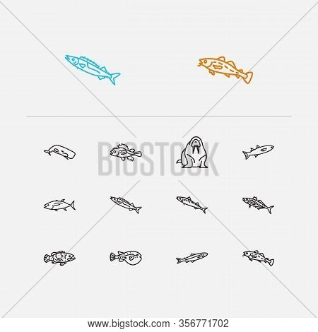 Aquatic Icons Set. Cod Fish And Aquatic Icons With Mackerel, Gemfish And Grouper Fish. Set Of Manate