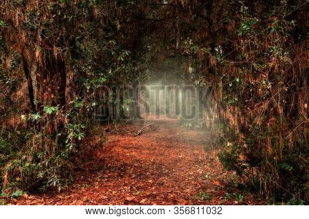 Mysterious Path In The Woods - Dark Passage Through The Forest With Light At The End Of The Tunnel -