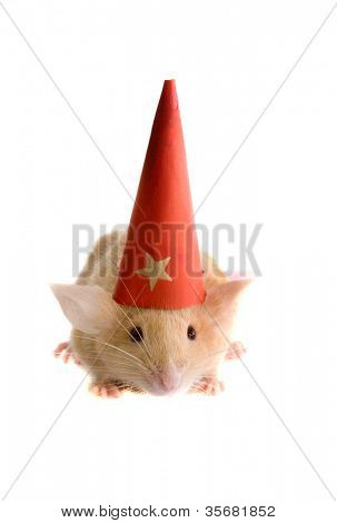 rat in a New Year's cap. Isolation on white.