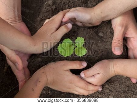 Kid's And Grown-up's Hands Holding A Young Plant.