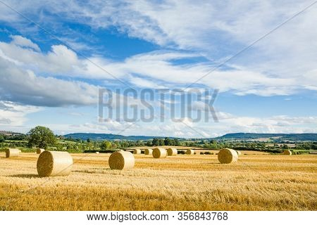Circular Hay Bales And Farmland With Blue Sky And English Countryside. Shropshire, Uk