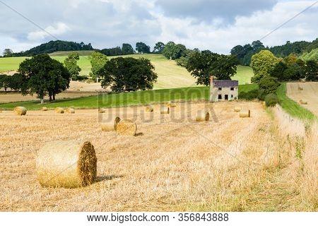 Circular Hay Bales Or Rolls Of Straw, In Farmland In Shropshire, Uk
