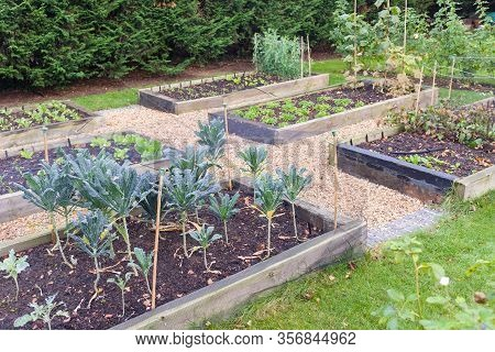 Vegetable Garden Raised Beds Made From Timber Sleepers. Kale (brassica) Is  Growing In The Foregroun