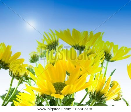 filled with yellow flowers in spring