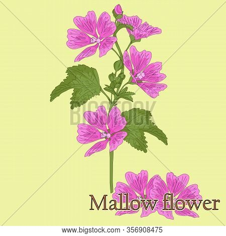 Mallow Flower. Illustration Of A Plant With Flowers For Use In Decorating, Creating Bouquets, Cookin