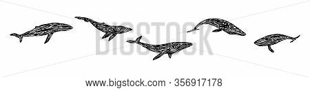 Endangered Ancient Whale Set. Hand Drawn Animal Prints Graphic Vector Illustration, Black Isolated O