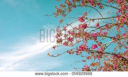 Panoramic Image Of Cherry Blossom With A Turquoise Blue Sky In The Background With Clouds Diagonally