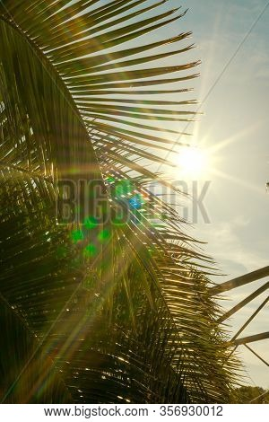 Backlit Palm Leaves On A Sunny Day With The Sun In Front In The Form Of A Star And Natural Reflectio