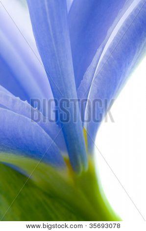 Beautiful fresh iris flowers with waterdrops