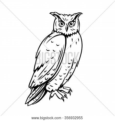 Owl Bird. Outline Icon For Zoo Design. Engraving Ink Vector Illustration